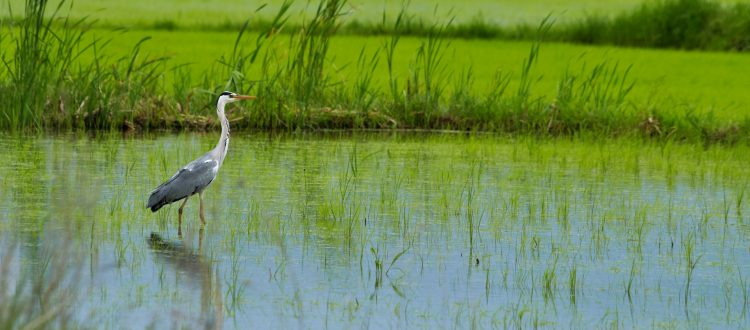 Република Македонија и заштитата на природата