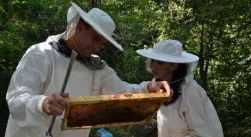 Обука за пчеларство
